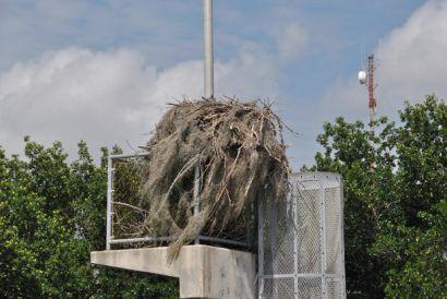 1_2015verl.Nest