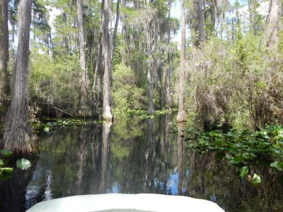 2015swamp1