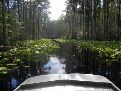 2015swamp2