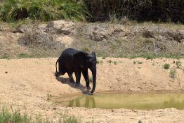 3_2_Tag_Elefanten03