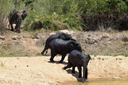 2_Tag_Elefanten04
