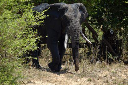 2_Tag_Elefanten07