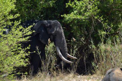 2_Tag_Elefanten11