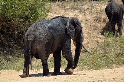 2_Tag_Elefanten12