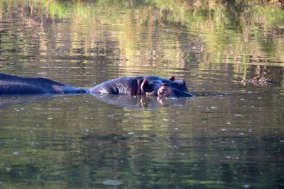 5_Tag_Hippo1