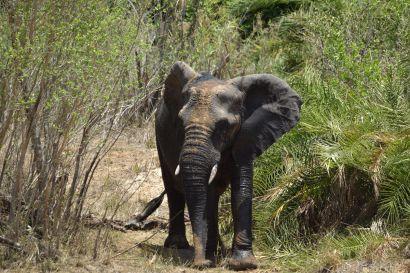 2_Tag_Elefanten05