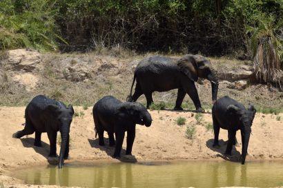 2_Tag_Elefanten06