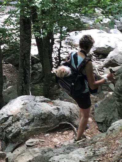 7_Tag_Trail22