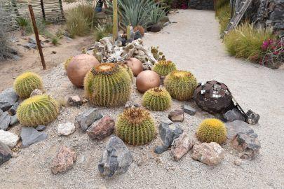 9_Tag_Cactus02
