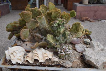 9_Tag_Cactus07
