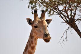 11_Tag_Giraffe08