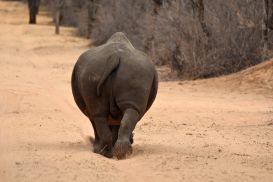 15_Tag_Rhino04
