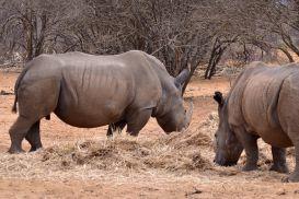 15_Tag_Rhino07