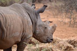 15_Tag_Rhino08