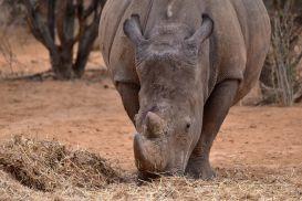 15_Tag_Rhino09
