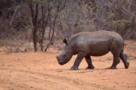 15_Tag_Rhino10