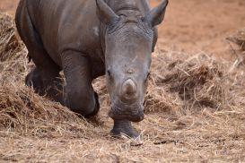 15_Tag_Rhino11