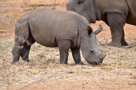 15_Tag_Rhino12