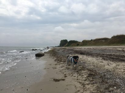 1_Tag_Hunde02